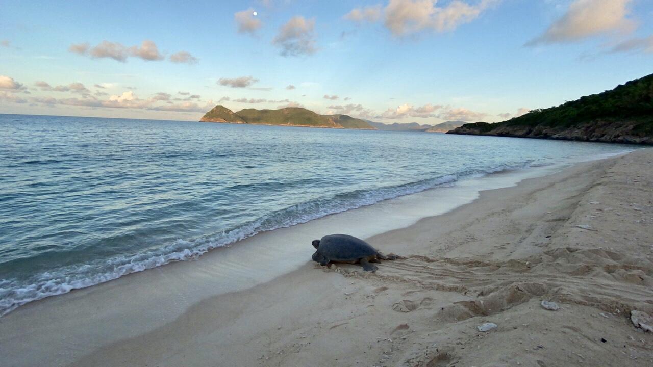 Bảo tồn rùa biển