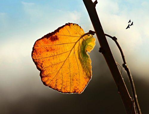 Mùa thu nhuộm màu lá, sao vàng cả màu mắt Cha tôi…