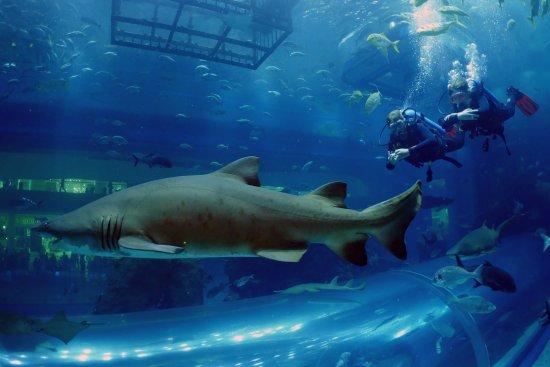 Bơi cùng cá mập