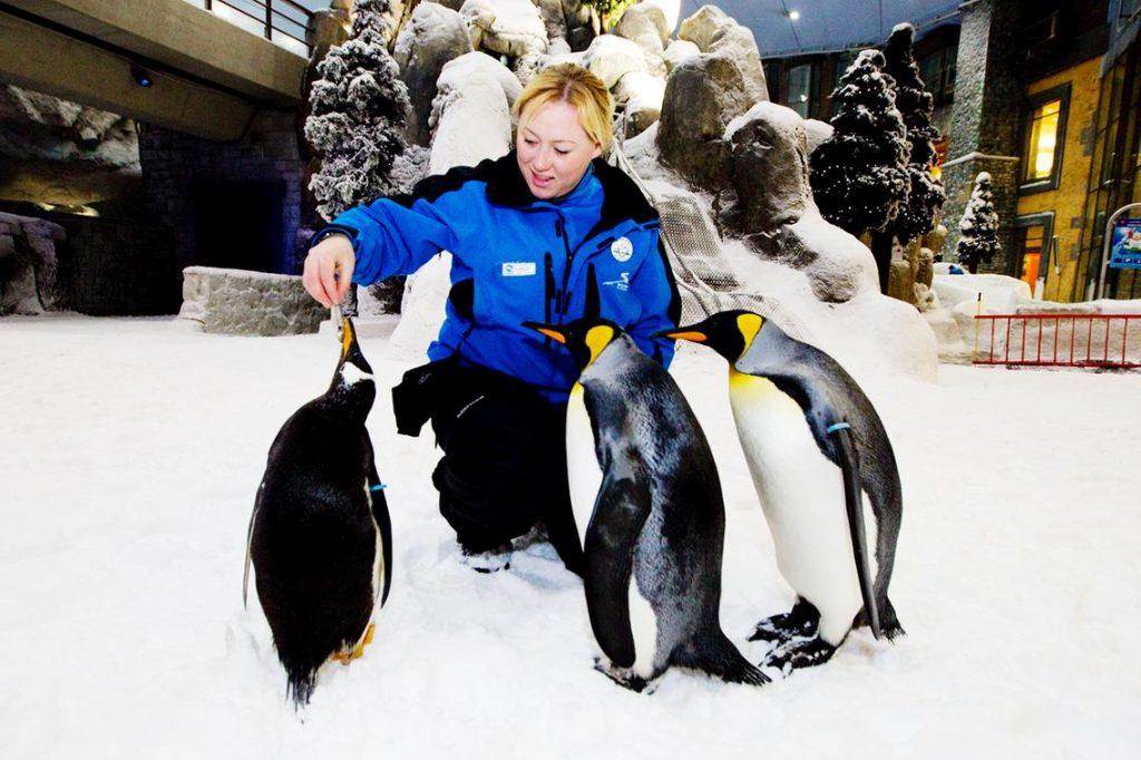 Diễu hành cùng chim cánh cụt ở Dubai - trải nghiệm chỉ có ở Dubai