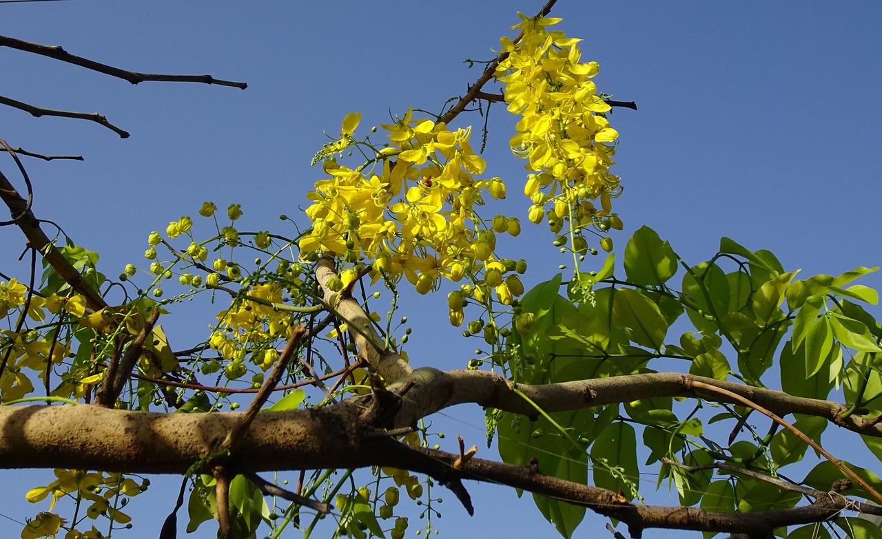 Quốc hoa Thái Lan