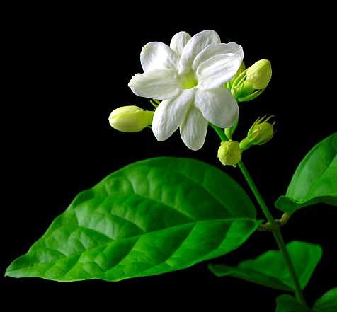 Quốc hoa các nước Đông Nam Á