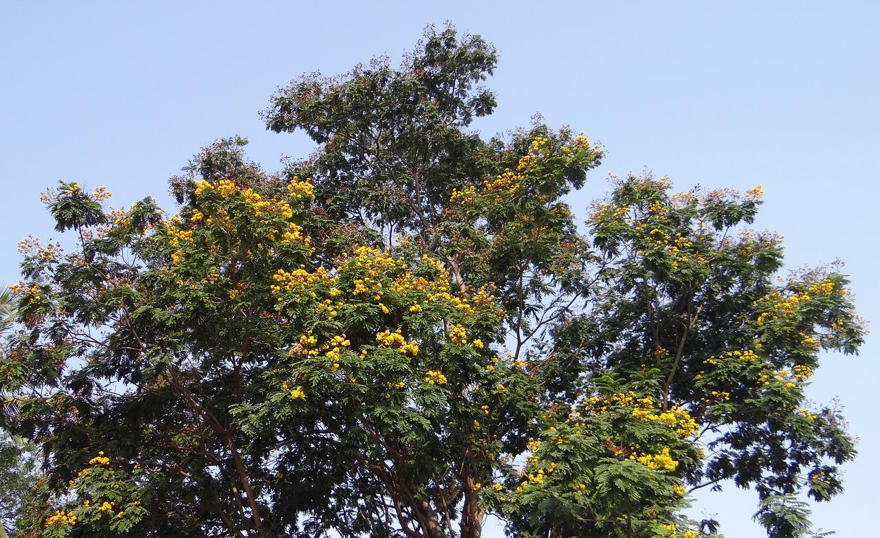 Quốc hoa Myanmar