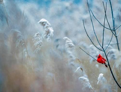 MÙA ĐÔNG XỨ NGƯỜI – Tuyết đầu mùa!