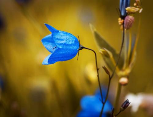 Quốc hoa các nước Bắc Âu, nhựng biểu trưng xinh đẹp.